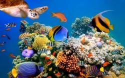 Морская живность