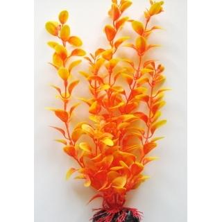 Людвилия ораньжевая 30 см
