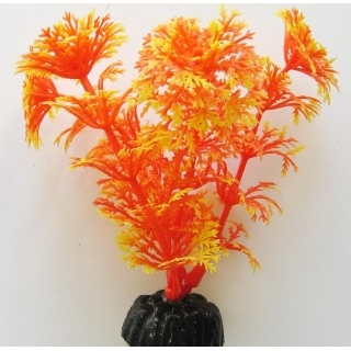 Кабомба оранжевая 10 см