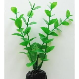 Бакопа зелёная 10 см