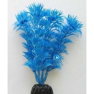Кабомба синий 10 см