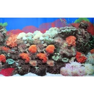 Фон для аквариума двусторонний, высота 40 см