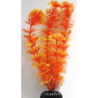 Кабомба оранжевая 30 см