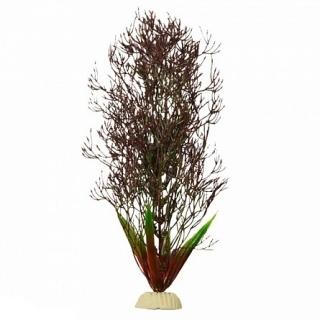 Горгонария черная 50 см