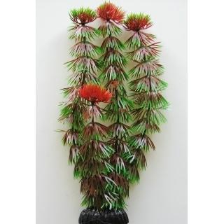 Кабомба красная 10 см