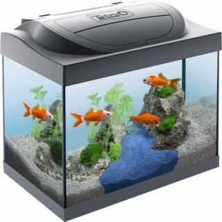 Tetra Starter Line LED 30L Goldfish